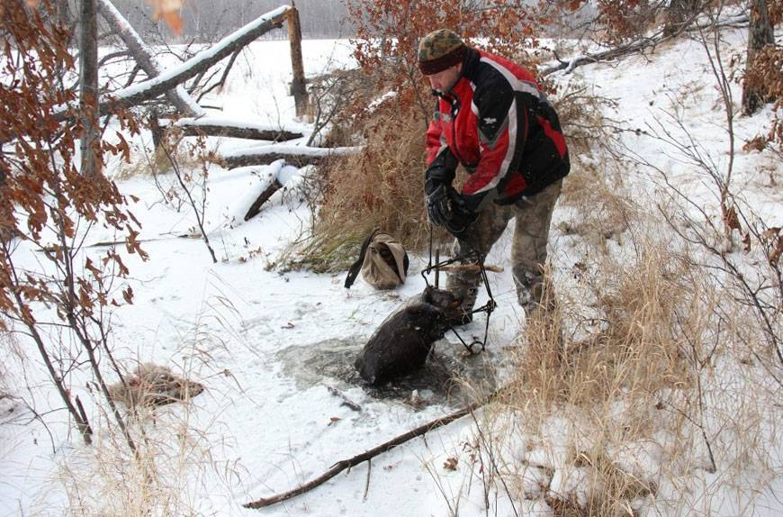 Как поймать бобра капканом осенью: эффективные способы и рекомендации