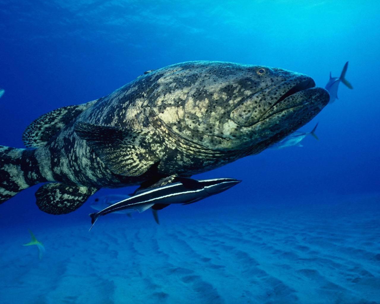 Самая крупная рыба в мире – топ-10 представителей водной среды