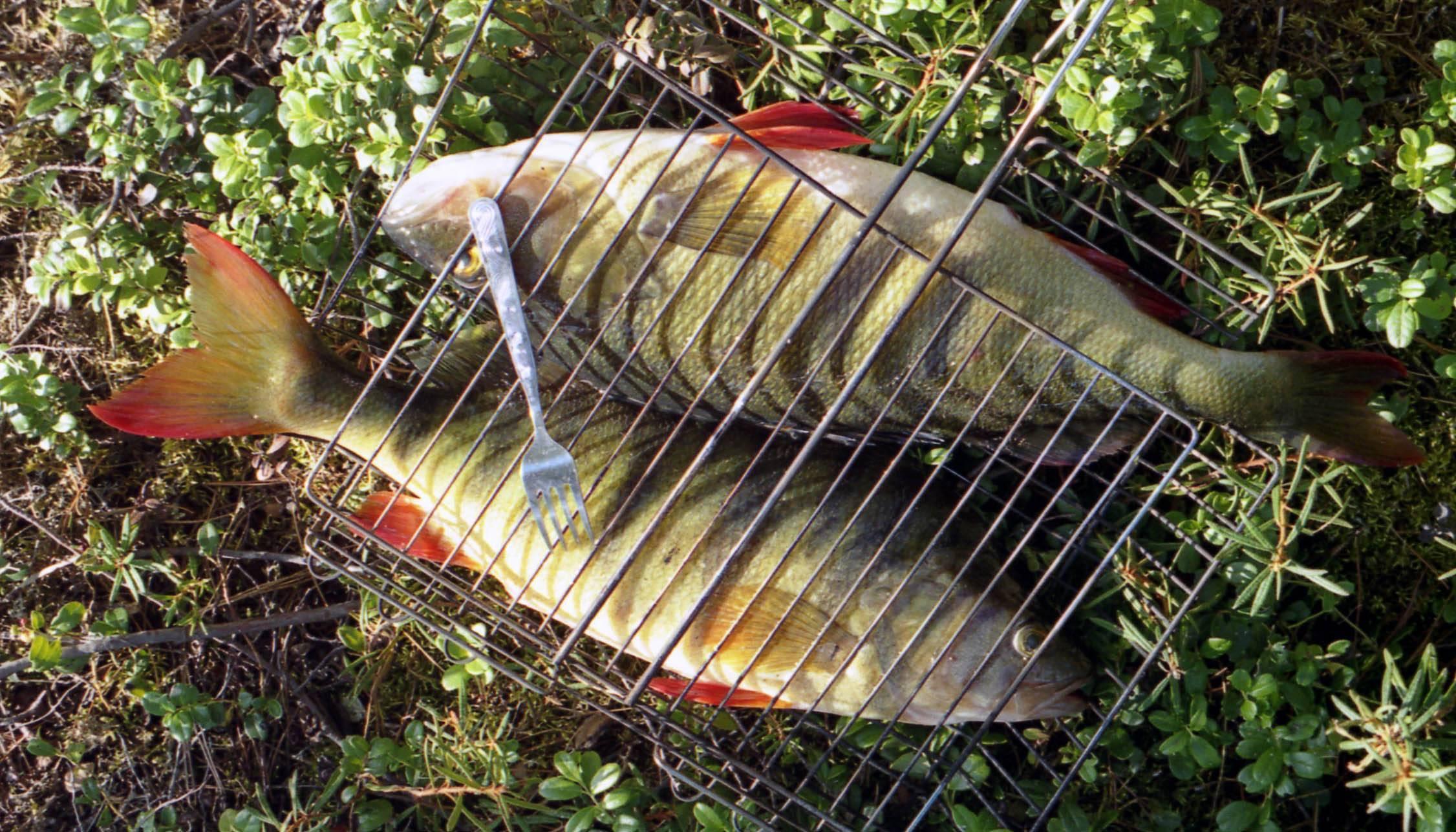 Рыбалка в республике тыва. отчеты рыбаков. форум