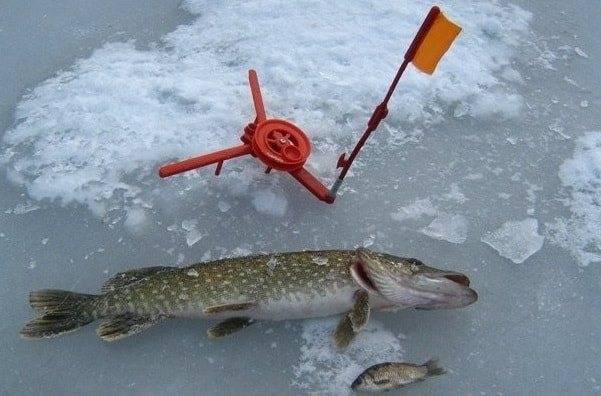 Ловля щуки по первому льду. где искать и на что ловить