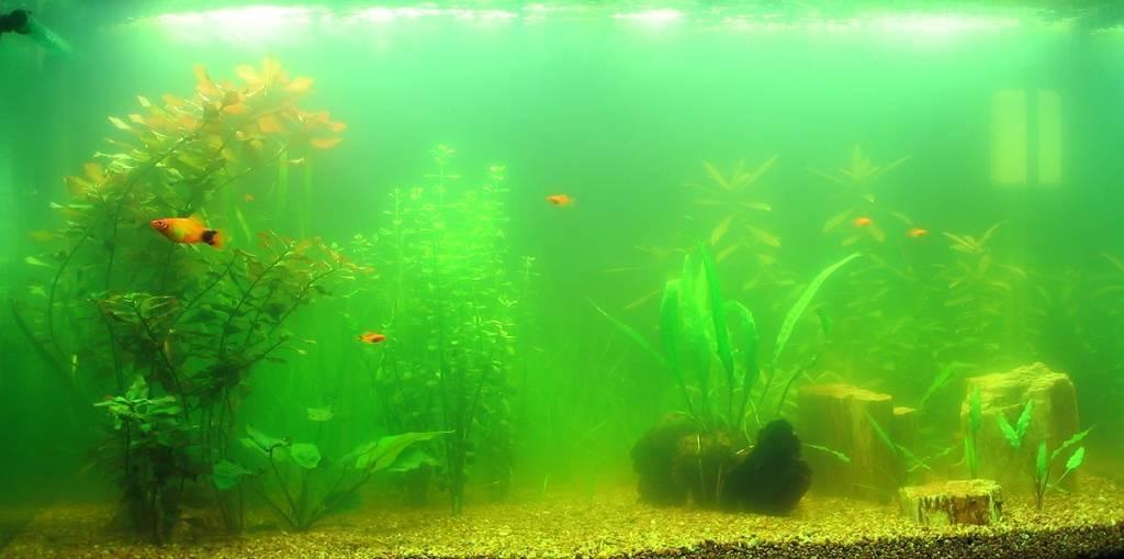 Почему погибают растения в аквариуме: причины замедления роста.