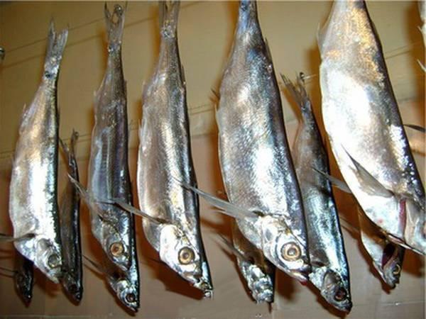 Как засолить и завялить чехонь, хранение вяленой рыбы