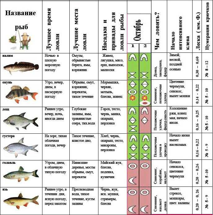 Какое давление лучше для рыбалки зимой при ловле хищника и мирной рыбы