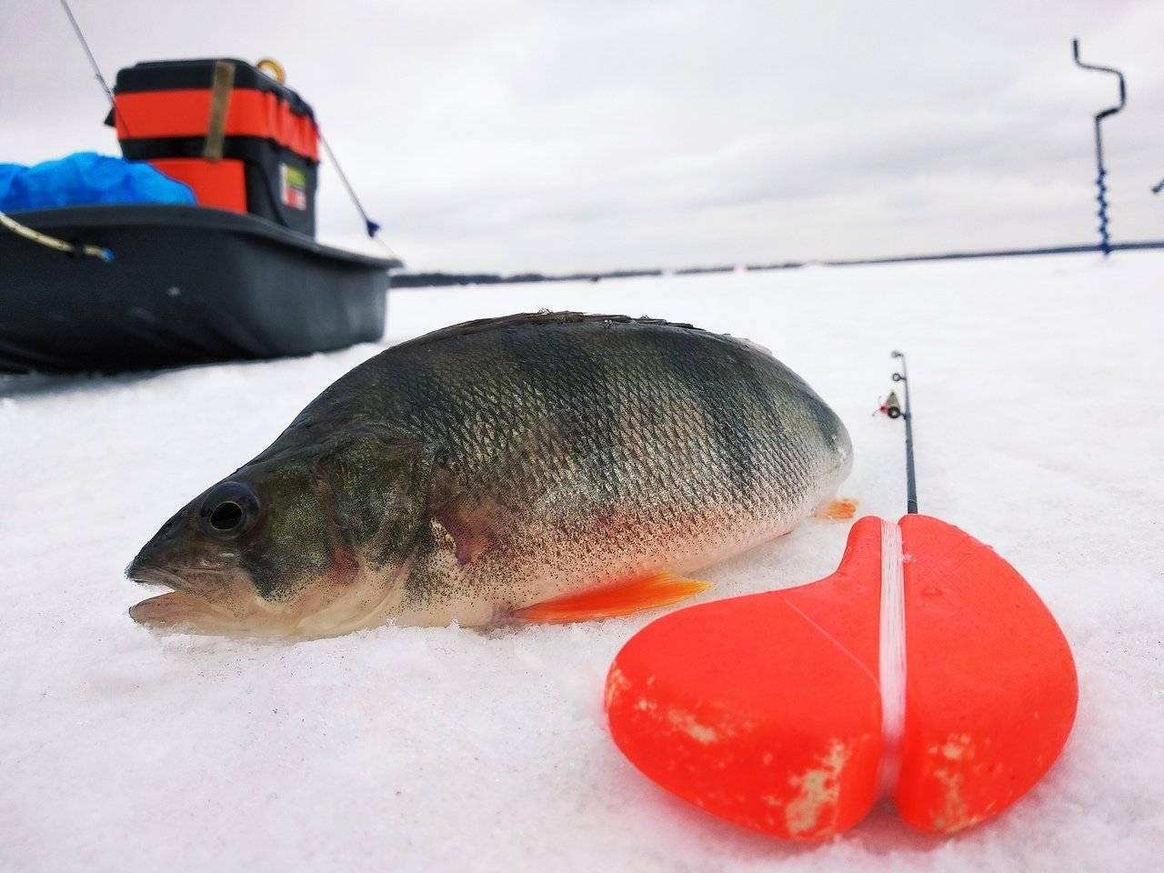 Рыбалка в тюменской области и тюмени: известные реки региона, популярные озёра, платные места вылова рыбы
