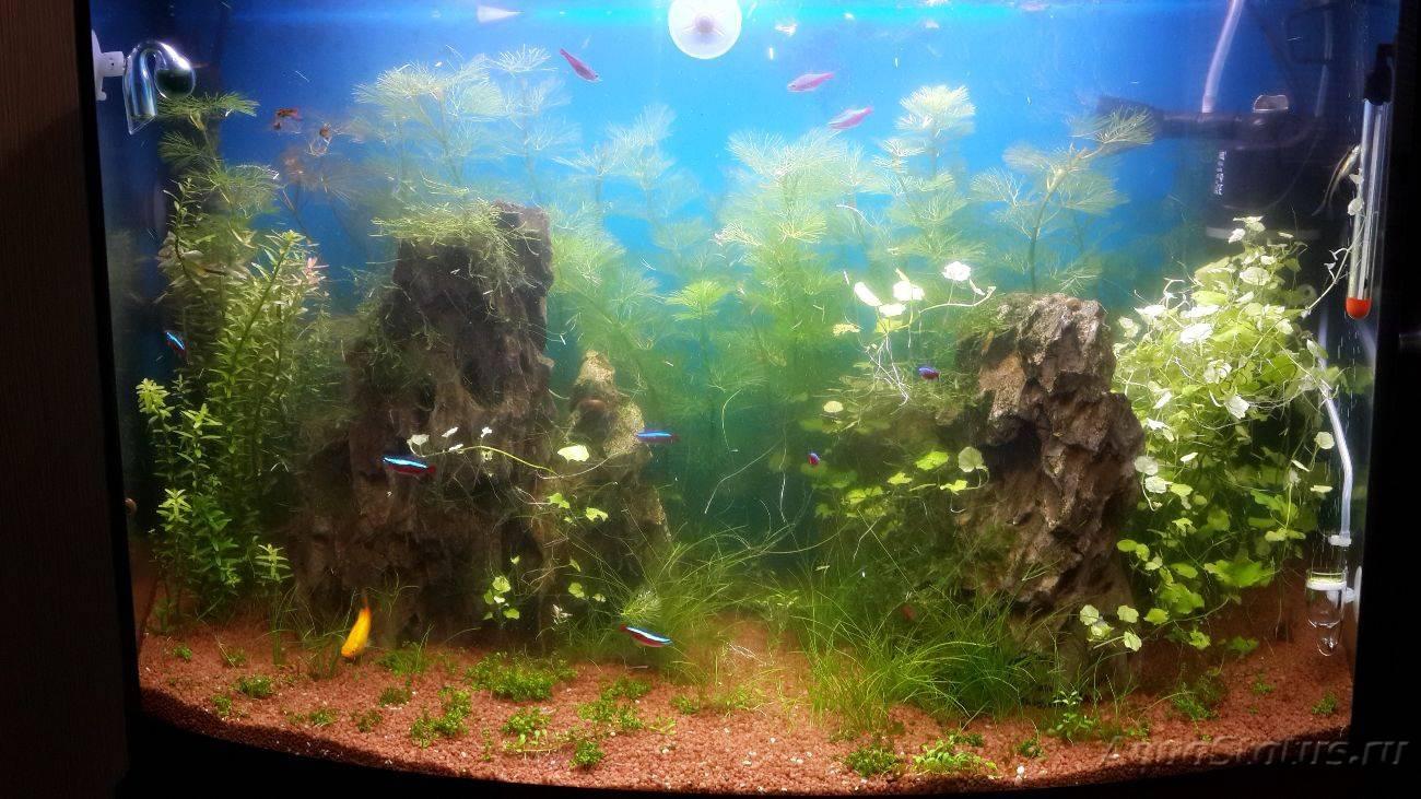 Почему зеленеет вода в аквариуме с рыбками: как с этим бороться в домашних условиях, причины быстрого цветения, с помощью каких средств можно избавиться