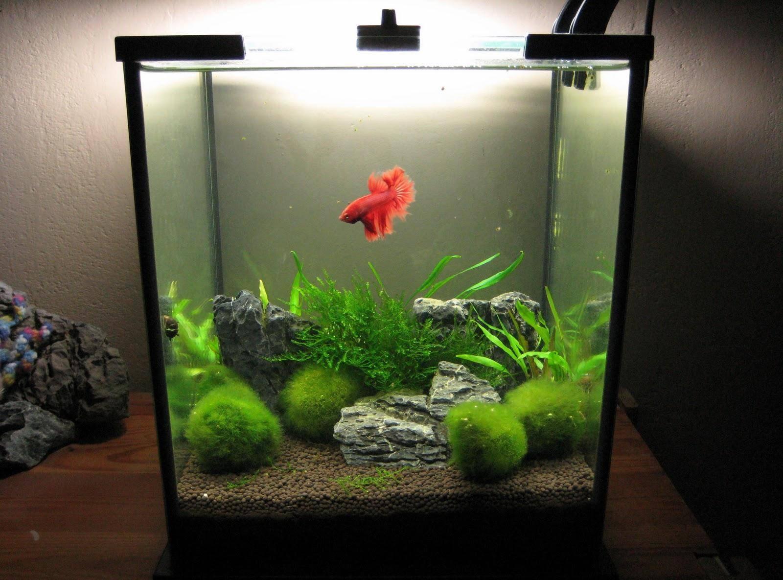 Аквариум на 10 литров: каких рыбок можно завести аквариум на 10 литров: каких рыбок можно завести