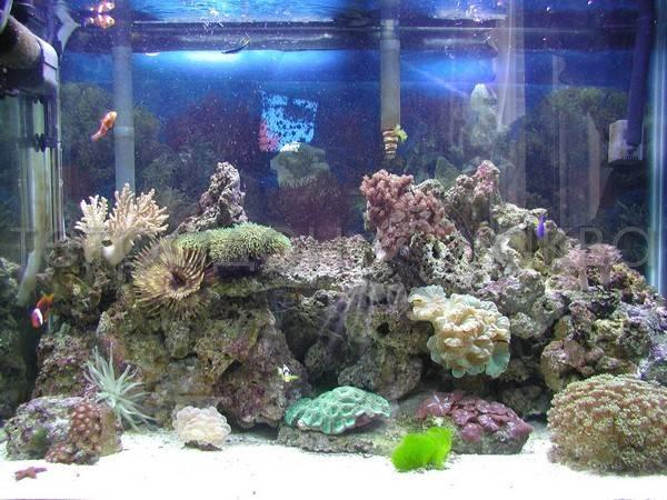 Оборудование необходимое содержания морского аквариума