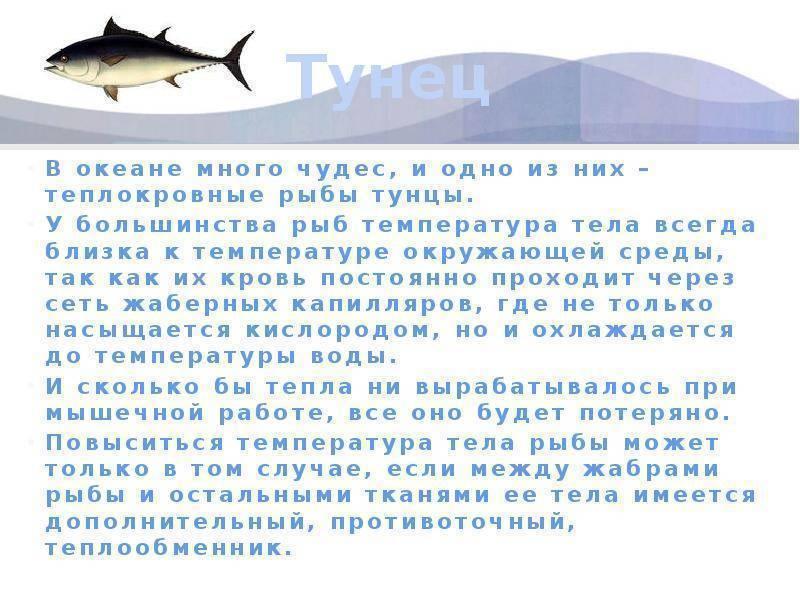 Тунец рыба. образ жизни и среда обитания тунца | животный мир