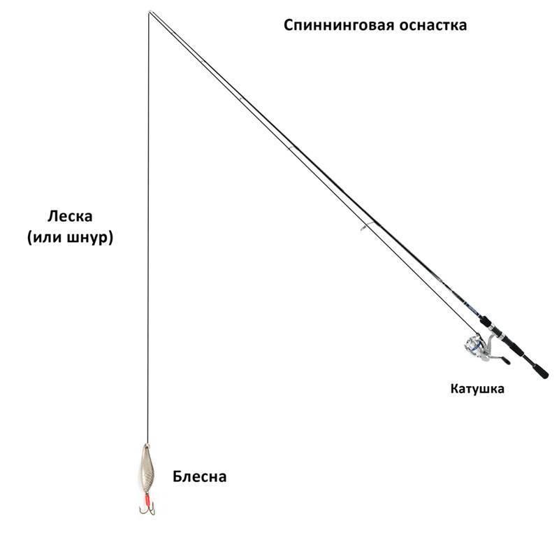 Спиннинг для начинающих: как выбрать спиннинг, техника ловли на спиннинг