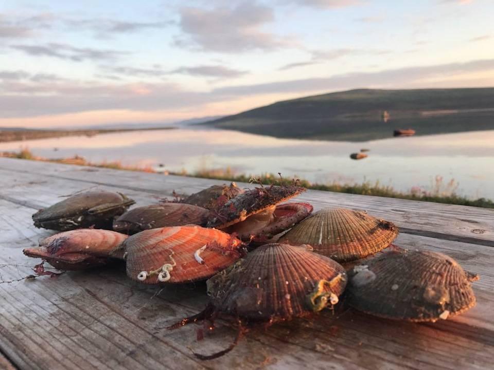Рыбалка в белом море: список рыболовных туров