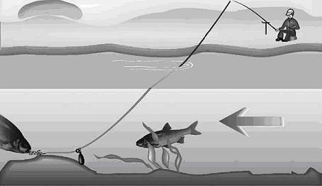 Сибас рыба: польза и вред, сколько стоит и где водится чилийский