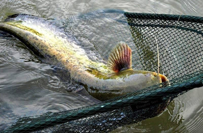 Рыбалка, плюсы от рыбной ловли