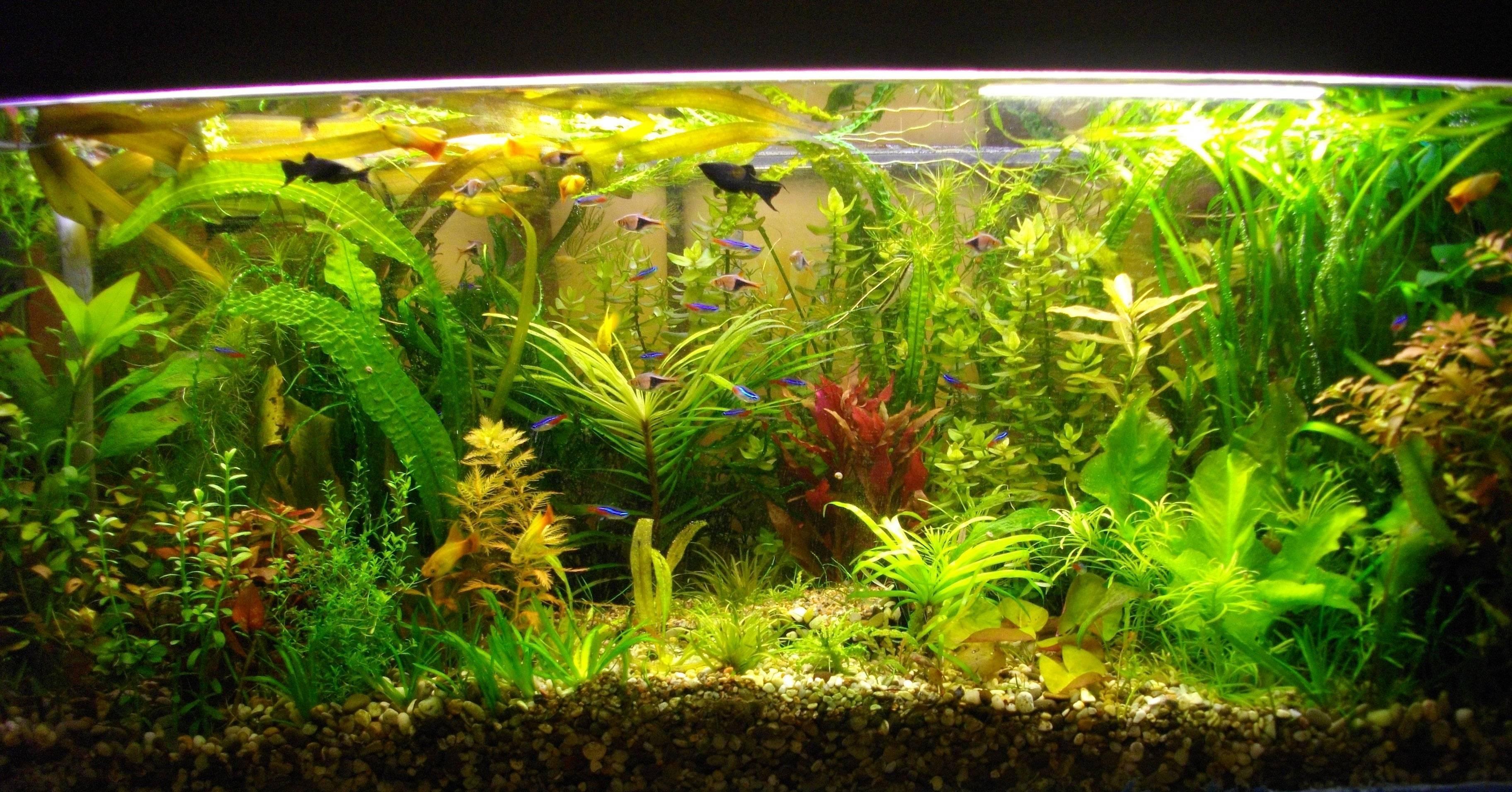 Зачем аквариуму нужны натуральные растения?