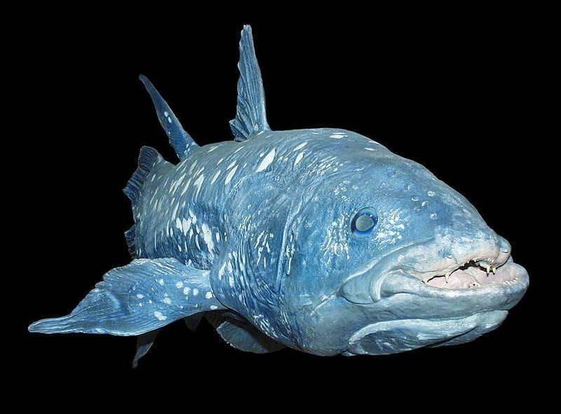Описание редких морских и пресноводных рыб