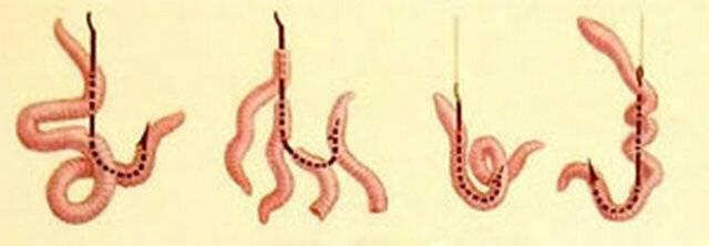 Правильная насадка червя на крючок