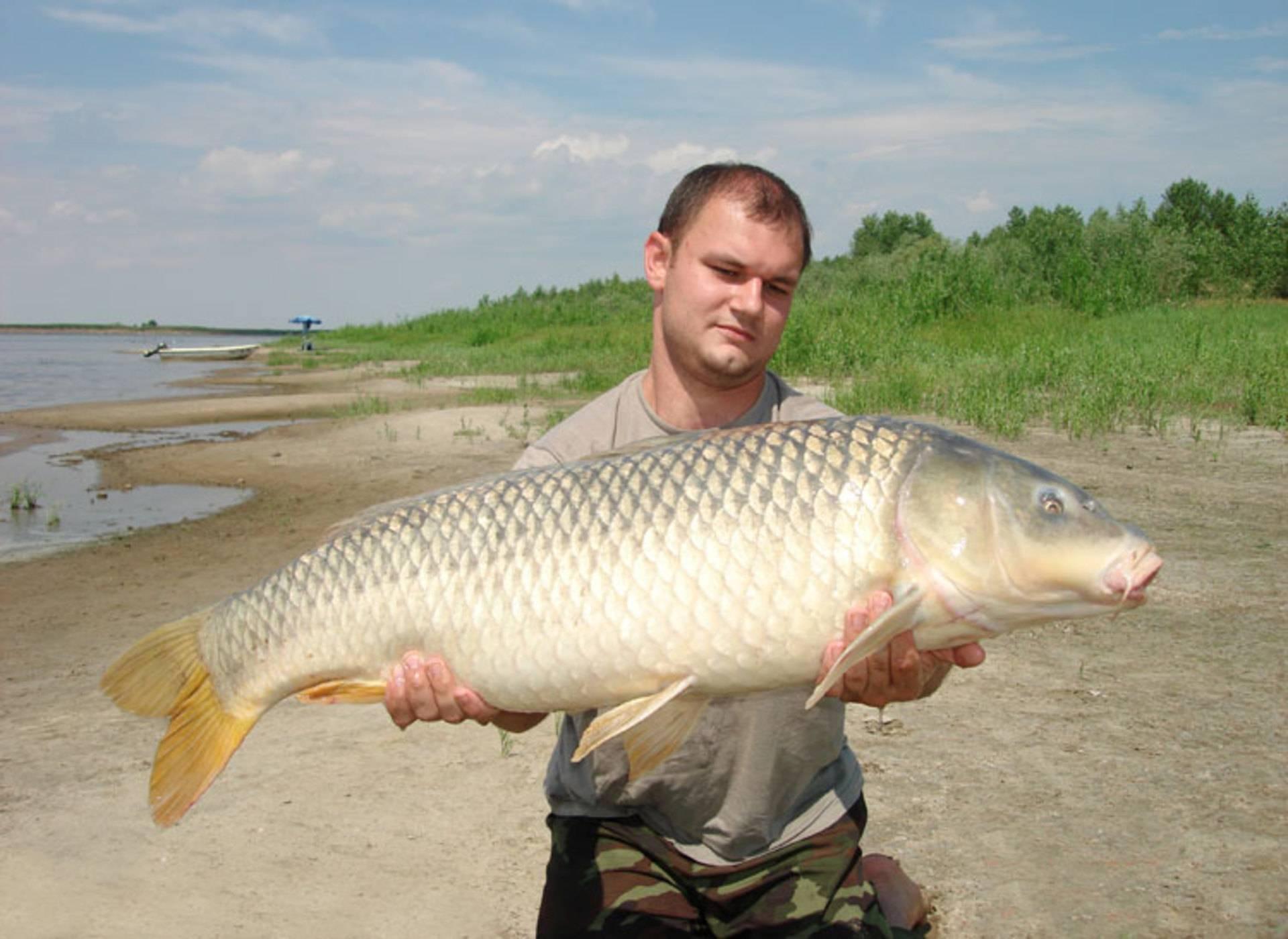 Рыбалка на сазан (карпа)  -  способы ловли, где искать, чем и на что ловить рыбу