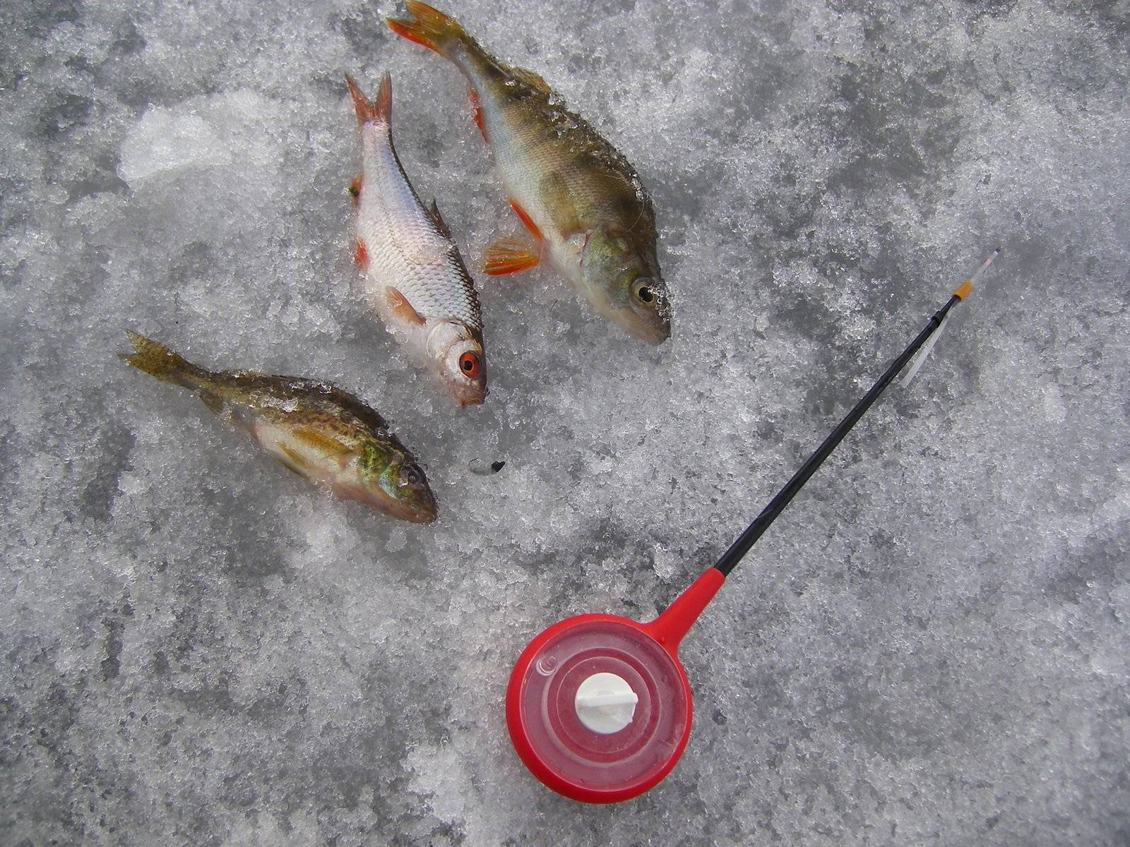 Тактика ловли на безмотылку зимой + видео