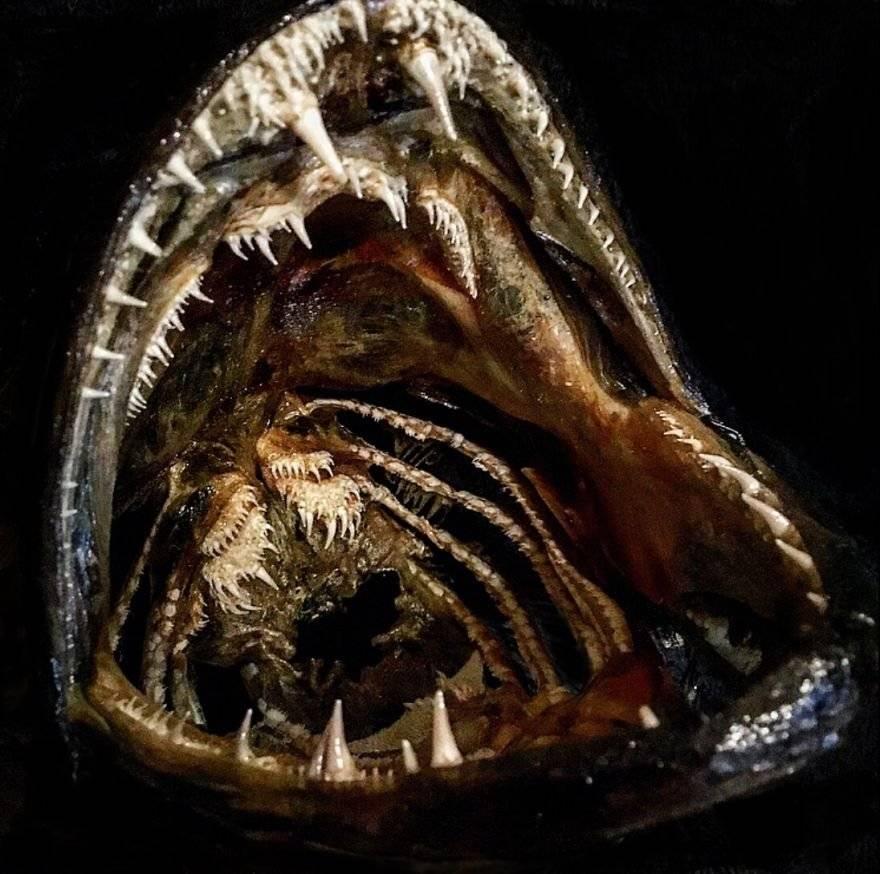 Морские черепахи: описание фото,виды,содержание,уход,питание | аквариумные рыбки
