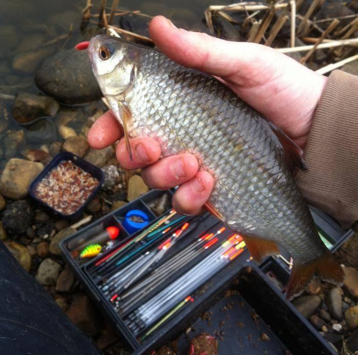 Осенняя ловля на поплавок. рыбалка осенью с поплавочной снастью