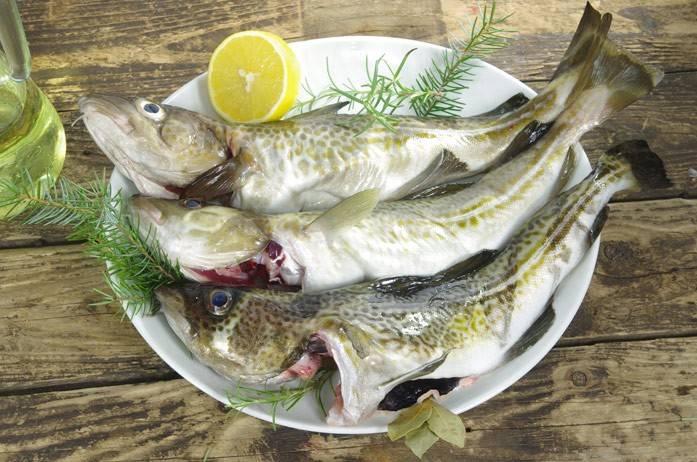 Жирные сорта рыбы: список, польза для здоровья