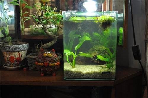 Как часто нужно менять воду в аквариуме и как правильно это сделать