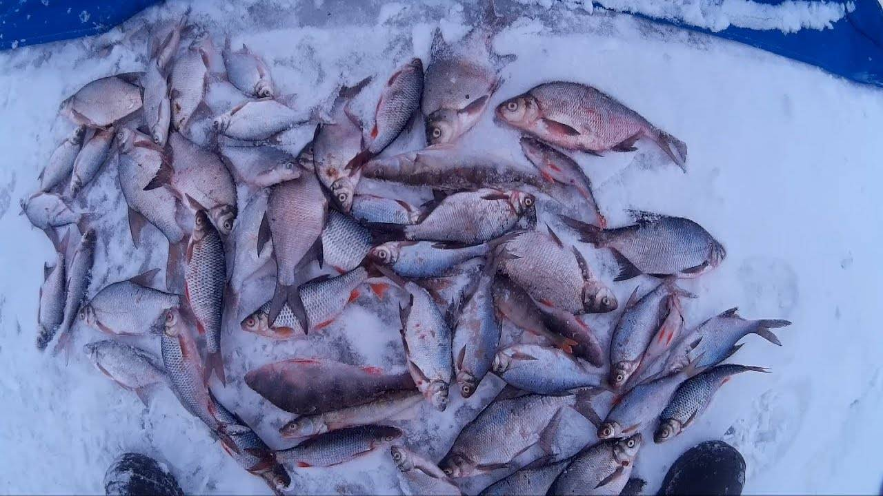 Отчеты о рыбалке на яузском водохранилище