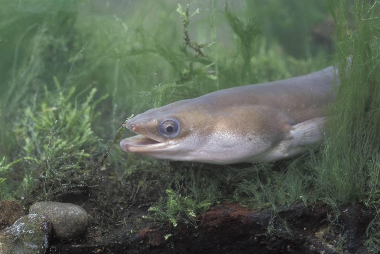 Интересные факты о рыбалке - интересные факты