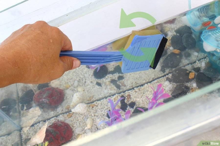 Инструкция по очистке домашнего аквариума
