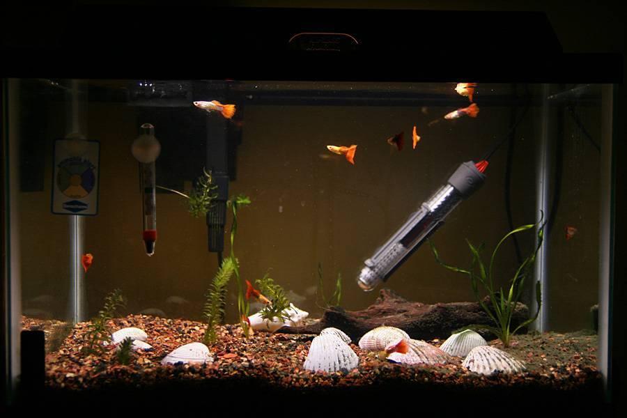Как продезинфицировать аквариум самыми известными способами?