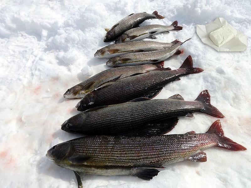 Рыбалка на енисее в разные времена года
