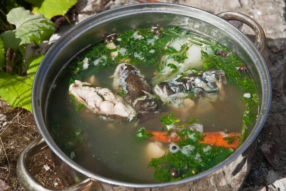 Классический рецепт ухи: из какой лучше рыбы и как приготовить настоящую уху в домашних условиях