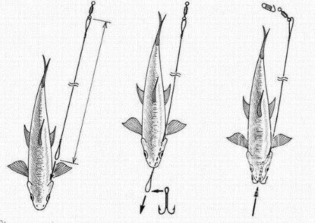 Транспортирование живой рыбы: особенности перевозки и основные требования к процедуре