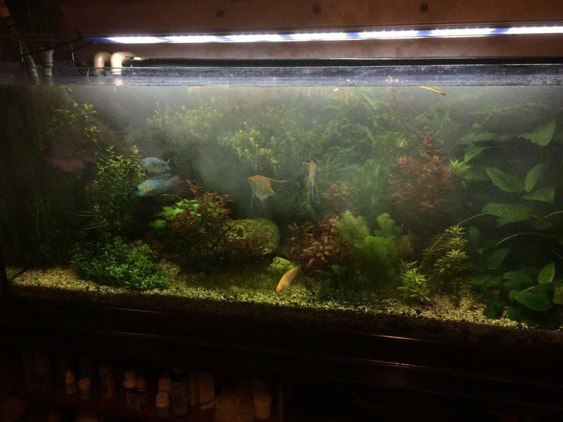 Отстаивание воды для аквариума