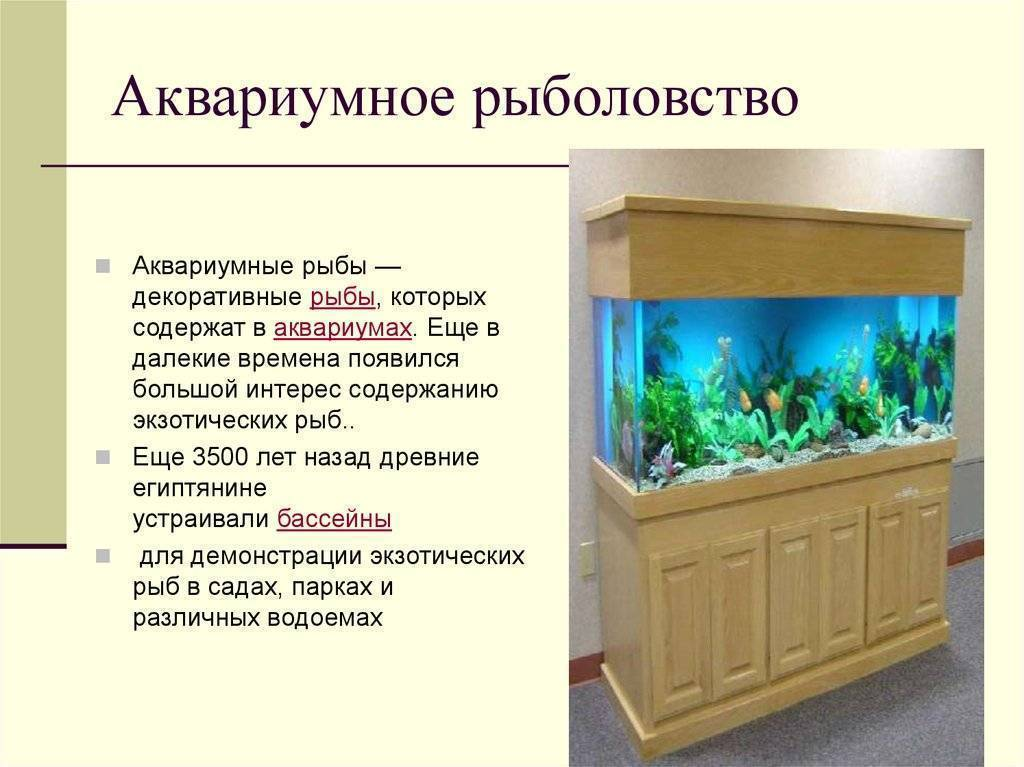 Какая вода должна быть в аквариуме?