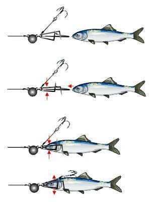 Блеснение на открытой воде. ловля хищной рыбы отвесным блеснением. оснастка и техника ловли. фото. видео.