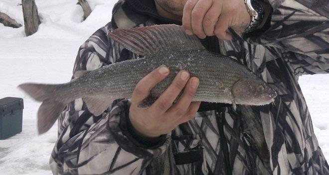 Прогноз клева рыбы в кемерово и кемеровской области, прогноз клева рыбы в кемеровской области.