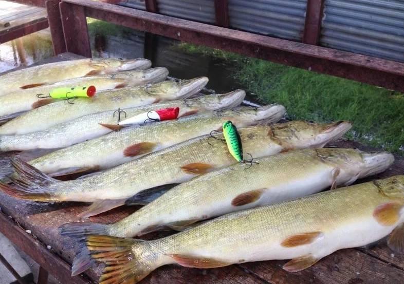 Рыбалка в одинцовском районе 2017