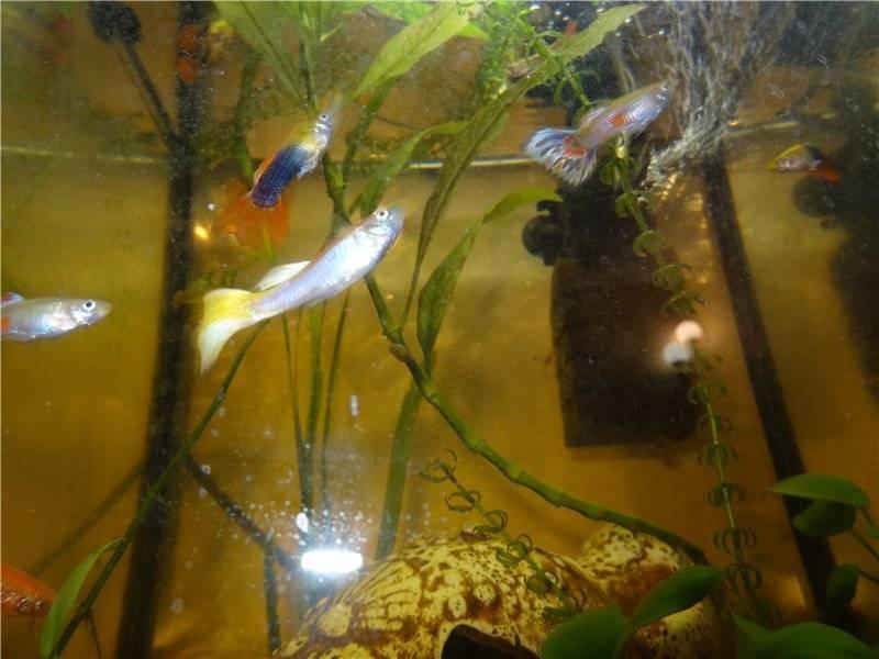 Рыбка лежит на дне: причины и что делать?