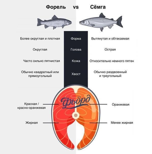 Что дороже форель или семга или лосось — topsamoe.ru