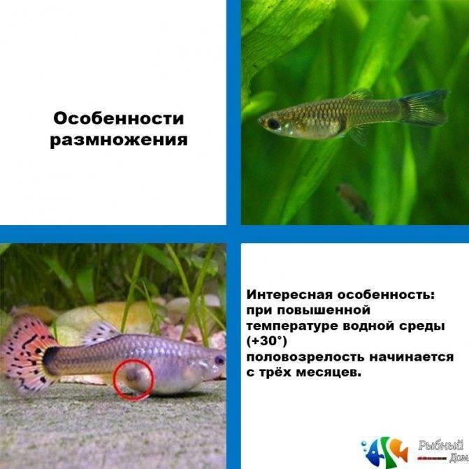 Топ-9 видов лабиринтовых рыбок