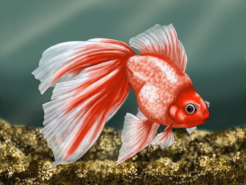 Совместимость аквариумных рыбок с другими рыбками