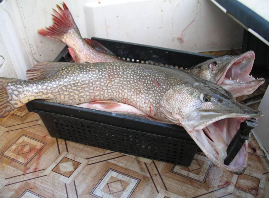 Рыбалка в томской области: лучшие места на карте топ-10