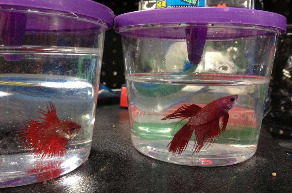 Разведение и продажа аквариумных рыбок как бизнес, отзывы
