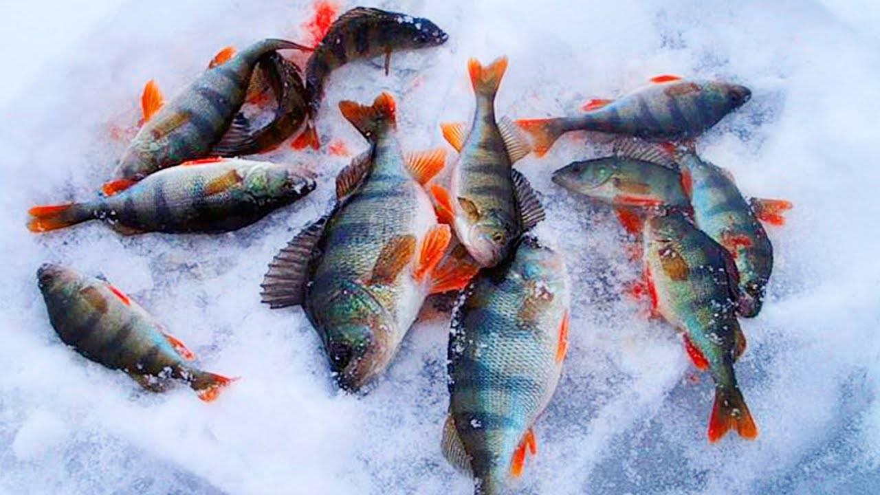 Зимняя рыбалка на щуку и поиск хищницы в разные периоды зимы зимняя рыбалка на щуку и поиск хищницы в разные периоды зимы