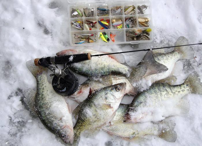 Ловля плотвы зимой: где искать и как ловить крупную плотву на зимнюю удочку