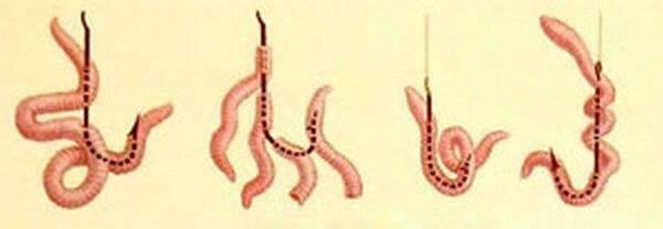 Как насаживать червя на крючок. правильный и эффективный способ.