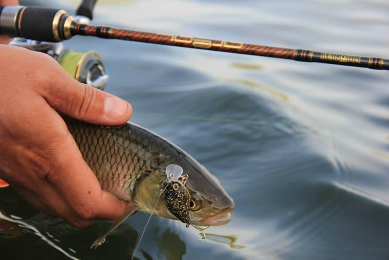 Ловля голавля на малых реках, уловистые блесны и воблеры для ловли голавля.