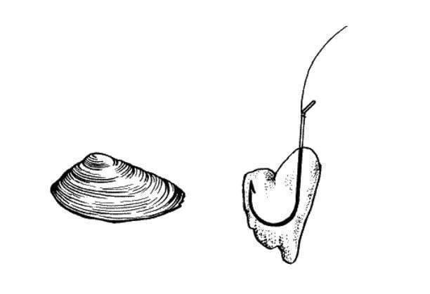 Октопус (силиконовый кальмар) как ловить и где купить - искусственная приманка для морской и пресноводной рыбалки | все о рыбалке в израиле
