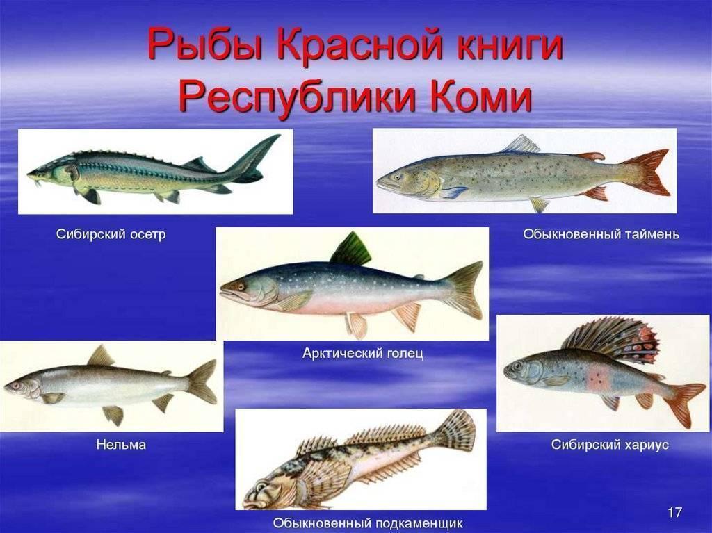 Редкие животные из красной книги россии и всего мира с фото