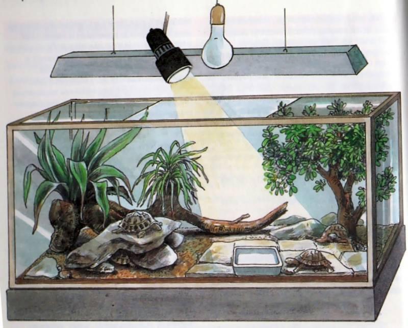 Террариум для сухопутной черепахи: как сделать своими руками